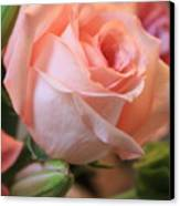 Soft Pink Rose Canvas Print