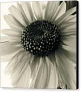 Soft White Light Canvas Print by Trish Hale