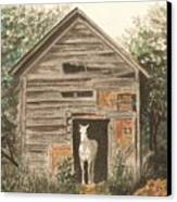 Solitaire Near Enterprise.  Solitary Horse Looking Out From Barn Door Canvas Print by Lynn ACourt
