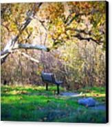 Solitude Under The Sycamore Canvas Print by Carol Groenen