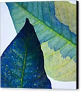 Something Blue Canvas Print by Bobby Villapando