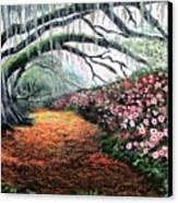 Southern Charm Oak And Azalea Canvas Print
