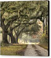Southern Drive Live Oaks And Spanish Moss Canvas Print by Dustin K Ryan