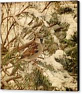 Sparrow In Winter Iv - Textured Canvas Print by Angie Tirado