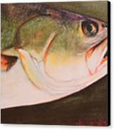 Speckled Trout Canvas Print by Amanda Ladner