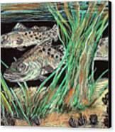 Specks In The Grass Canvas Print by Robert Wolverton Jr