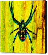 Spider Canvas Print by Daniele Smith