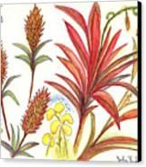 Spiky Florida Flowers Canvas Print