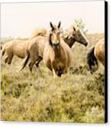 Spirit Of The Horse Canvas Print