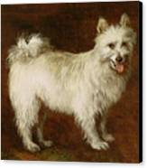 Spitz Dog Canvas Print by Thomas Gainsborough