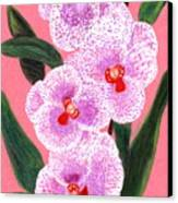 Spotted Orchid Against A Pink Wall Canvas Print