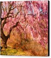 Spring - Sakura - A Beautiful Spring Day  Canvas Print by Mike Savad