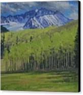 Spring Aspen Canvas Print