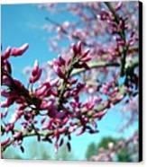 Spring Bliss Canvas Print