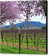 Spring Blossoms Near Calistoga Canvas Print by Charlene Mitchell