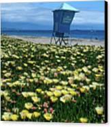 Spring Break Santa Barbara Canvas Print by Kathy Yates