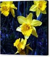 Spring Daffodills Canvas Print