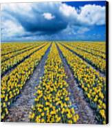 Spring Fields Canvas Print