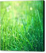 Spring Green Grass Canvas Print by Dirk Wüstenhagen Imagery