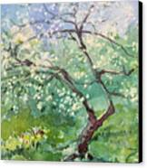 Spring Plum Canvas Print