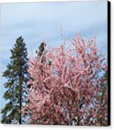 Spring Trees Bossoming Landscape Art Prints Pink Blossoms Clouds Sky  Canvas Print