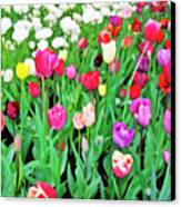 Spring Tulips Flower Field I Canvas Print by Artecco Fine Art Photography