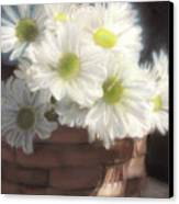 Spring White Daisies Canvas Print by Melissa Herrin