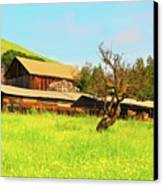 Springtime Barn San Francisco Bay Canvas Print by Gus McCrea