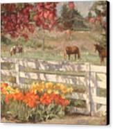 Springtime Horses Canvas Print