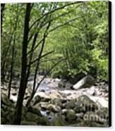 Springtime In The Smoky Mountains Canvas Print