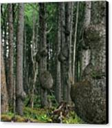Spruce Burls Olympic National Park Wa Canvas Print by Christine Till