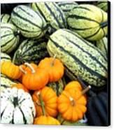 Squash Harvest Canvas Print