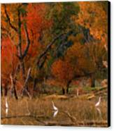 Squaw Creek Egrets Canvas Print
