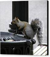 Squirrel On Garbage Can Canvas Print by Richard Mitchell