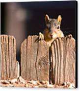 Squirrel On The Fence Canvas Print
