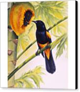 St. Lucia Oriole And Papaya Canvas Print