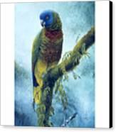 St. Lucia Parrot - Majestic Canvas Print