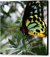 Stained Glass Butterfly Canvas Print