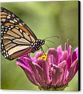 Stained Glass Wings Canvas Print by Jeff Swanson
