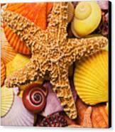 Starfish And Seashells  Canvas Print by Garry Gay