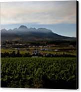 Stellenbosch Vineyard Canvas Print