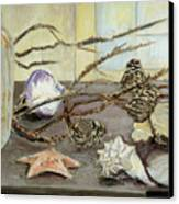 Still Life With Seashells And Pine Cones Canvas Print