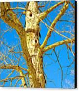 Strange Tree Canvas Print