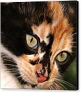 Stray Kitten Canvas Print