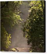 Stream Light Canvas Print by Steve Gadomski