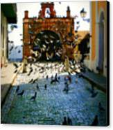 Street Pigeons Canvas Print by Perry Webster