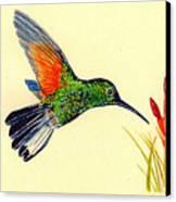 Stripe Tailed Hummingbird Canvas Print by Michael Vigliotti