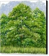 Studio Windows 6-28-08 Canvas Print