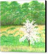 Studio Windows-7-5-08-dogwood Canvas Print