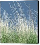 Study Of Grass Canvas Print
